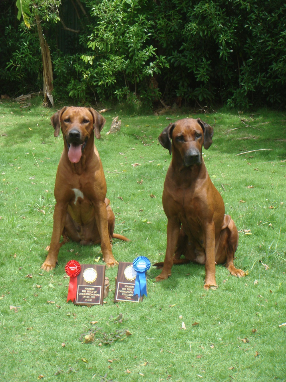 Dog Obedience Training Titles