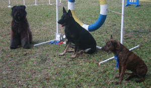Training dogs in Barbados