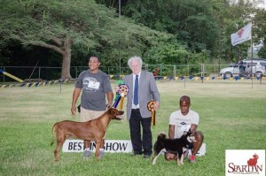 Rhodesian Ridgeback and Shiba Inu win in Barbados