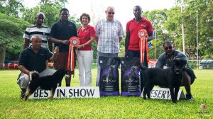 Best in Show dogs in Barbados