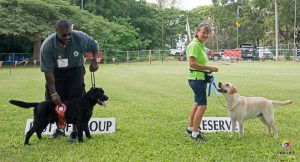 Labrador Retrievers win the Gundog Group