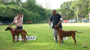 Hound Group won by the only breed entered, Rhodesian Ridgebacks