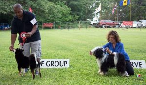winners at dog show in Barbados