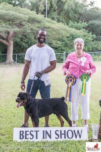 Rottweiler Goes Best in Show, November 2016