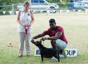 Staffordshire Bull Terrier at dog show in Barbados