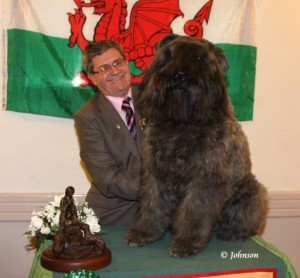 Bouvier Des Flandres is Welsh Dog of the Year