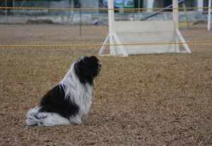 Obedience Trials in Barbados