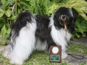 Tibetan Terrier and her obedience trophy