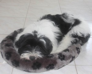 Tibby and her puppy bed