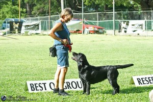 Labrador Retriever wins Gundog group