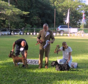 Terrier Group winners in Barbados November show