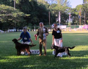 Gundog Group winners