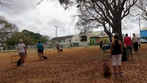 Basic obedience dog training in Barbados