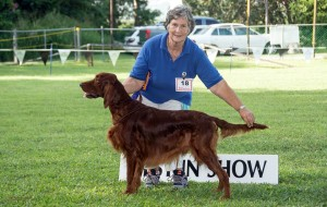 Irish Setter at a dog show