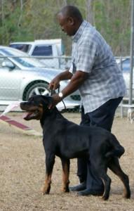 Billy, winning Best in Show in Barbados