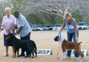Rottweiler and Boxer win Working Group