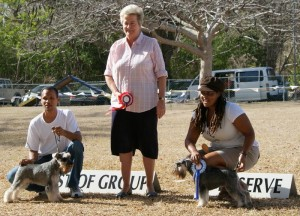 Utility group winners at dog show