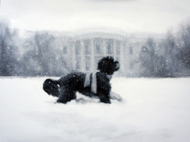 The White House Dog on the White House Greetings Card