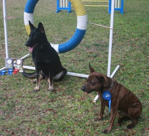 Dogs in Barbados who were awarded CD titles in March, 2015