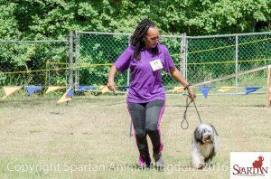 Tibetan Terrier at dog show in Barbados