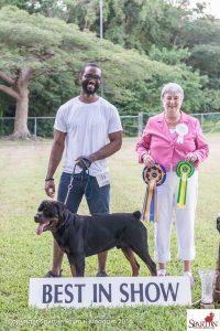 Rottweiler Goes Best in Show, November 2016