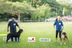 All Breeds Championship Dog Show in Barbados, November 018