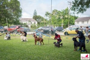 dogs winning groups in show ring in Barbados