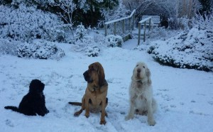 Dogs in winter time