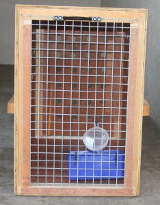 Crate accepted by airlines for shipping dogs