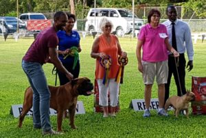 Best in Show and Reserve Best in Show winners at October show in Barbados